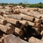 madeira-1