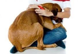 Animais domésticos são sensíveis à poluição sonora