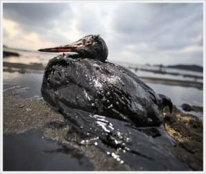 danos-ambientais